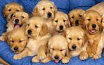 Новорожденный ребенок и собака: правила знакомства, особенности совместного проживания, важные рекомендации