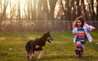 Ребенок и домашние животные: плюсы и минусы совместного проживания, отзывы родителей