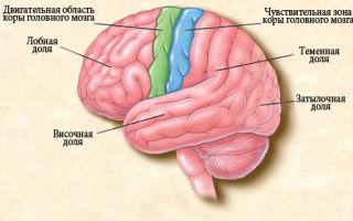Эпилепсия у детей: как проявляется болезнь и первая помощь при эпиприступах детям разного возраста