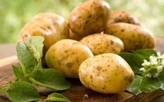 Чем полезен картофель для ребенка и как его правильно приготовить?