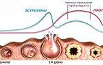 Утрожестан при планировании беременности: дозировка и способы применения, меры предосторожности