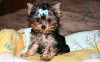Лучшая порода собак для детей: выбираем домашнего питомца с умом