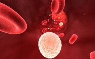 Почему снижается уровень лейкоцитов в крови?