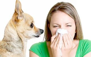 Роль эозинофилов в аллергических реакциях