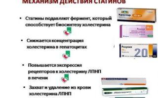 Классификация и разновидности липопротеидов, причины липидного дисбаланса и методы его коррекции