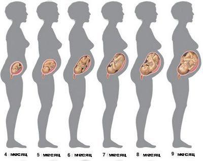 Двадцать первая неделя беременности