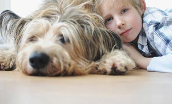 Ребенок и домашние животные