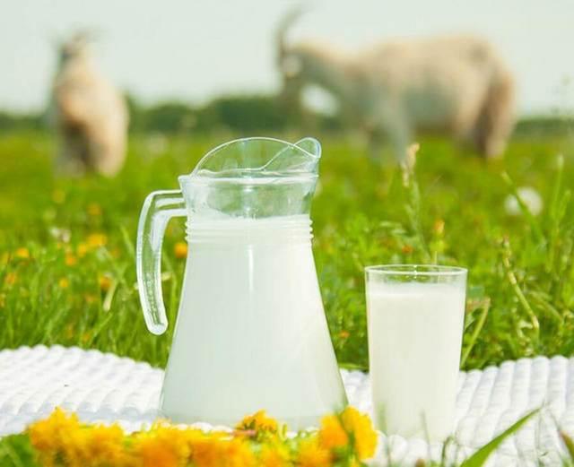 Коровье и козье молоко детям – чему отдать предпочтение?