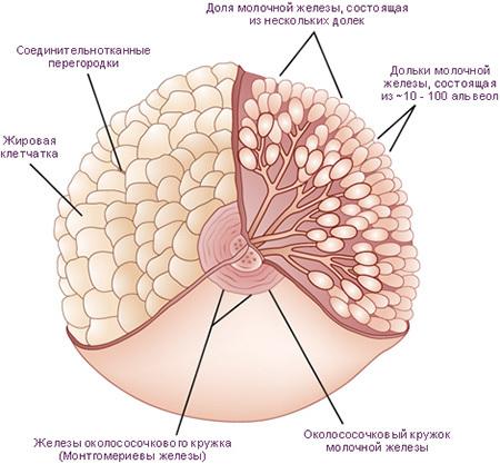 Мастит у детей: лечение гнойного мастита у грудного ребенка до года