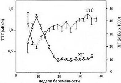 Гормоны щитовидной железы при беременности: нормы, анализы и УЗИ при заболеваниях