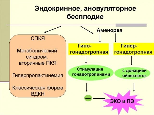 Эндокринное бесплодие у женщин: что это, причины, лечение