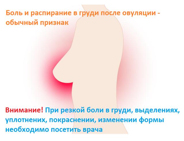Овуляция: признаки, симптомы, ощущения, как проходит овуляция у женщин?