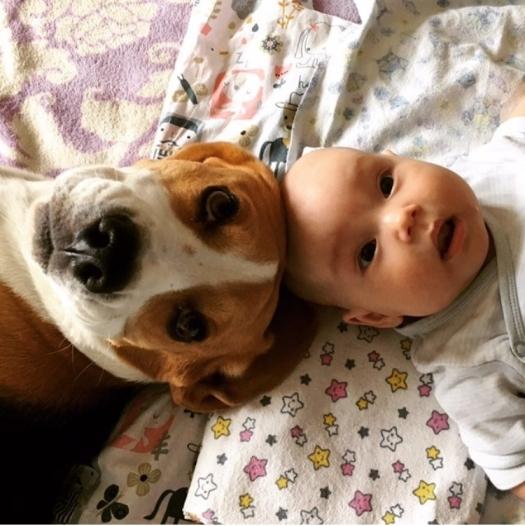 Новорожденный ребенок и собака: как подготовиться