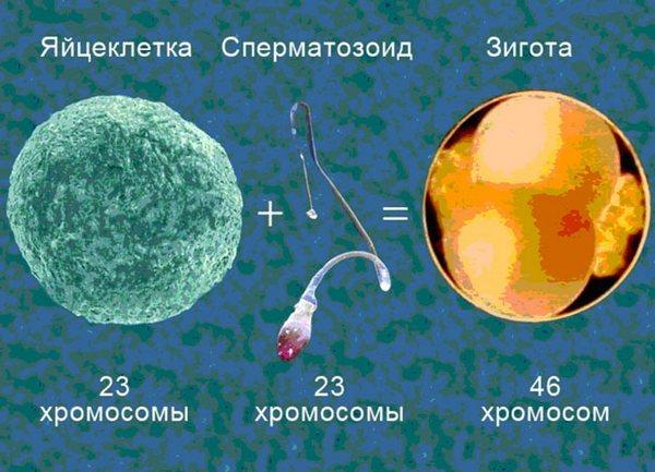 Синдром Шерешевского-Тёрнера: причины возникновения, симптомы и лечение