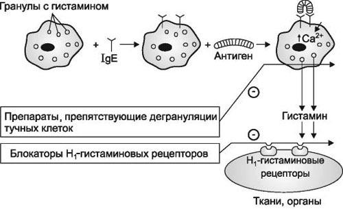 Как действуют антигистаминные препараты при аллергии