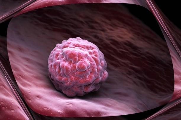 Развитие эмбриона по неделям и дням беременности от зачатия