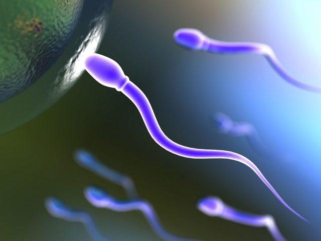 Как повысить активность сперматозоидов и увеличить подвижность: что влияет и норма
