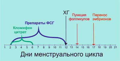 Протокол ЭКО: короткий и длинный протокол по дням подробно, отзывы