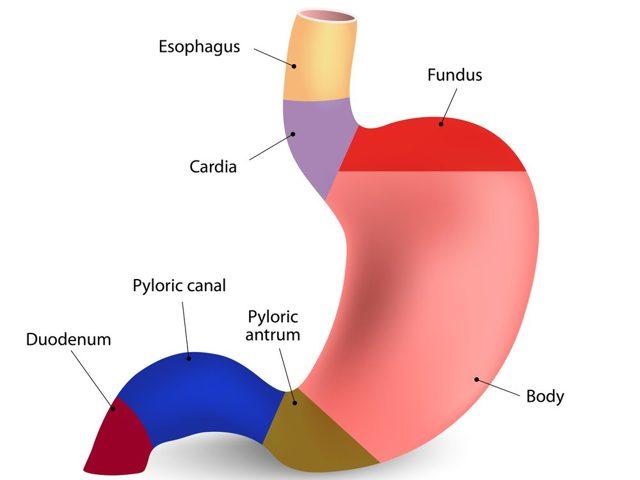 Пилоростеноз у новорожденных: причины, симптомы и лечение