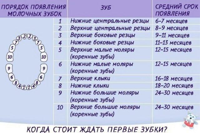 Сроки прорезывания зубов у детей