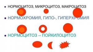 Значение и нормы показателя анизоцитоза в анализе крови