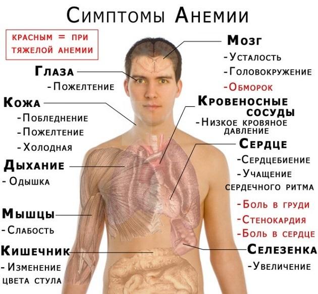 Причины отклонения от нормы показателя MCV в крови