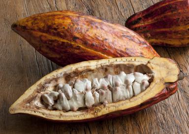 Применение масла какао при геморрое