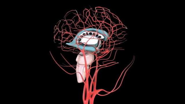 Особенности ишемии головного мозга