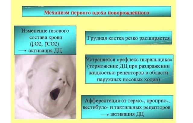 Открытое овальное окно: норма или патология