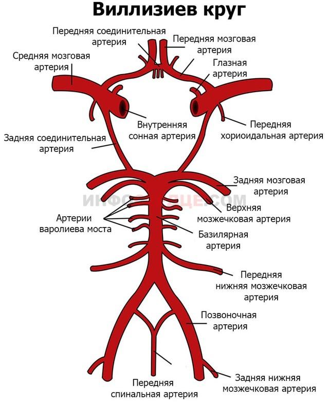 Возможные патологии Виллизиева круга и их лечение