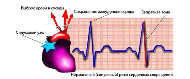 Показатели нормы и нарушения сердечного ритма