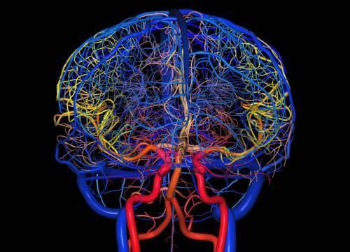 Причины развития, диагностика и лечение сосудистого генеза