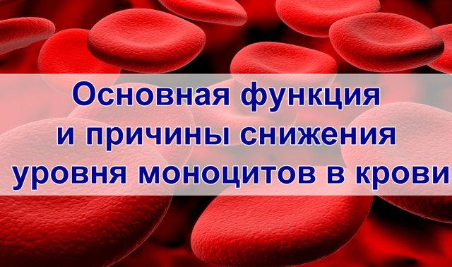 Основная функция и причины снижения уровня моноцитов в крови