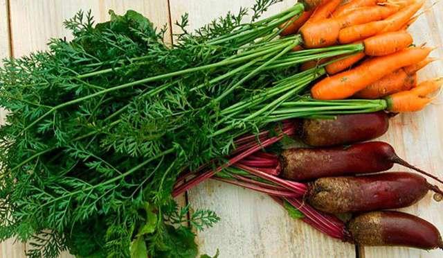 Лечение геморроя морковью в домашних условиях