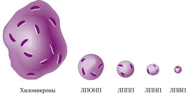 Что такое ЛПОНП и их влияние на организм человека
