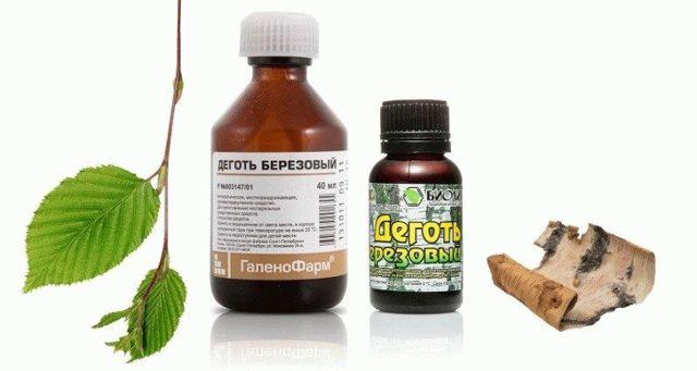 Простые и эффективные рецепты: золотой ус от геморроя
