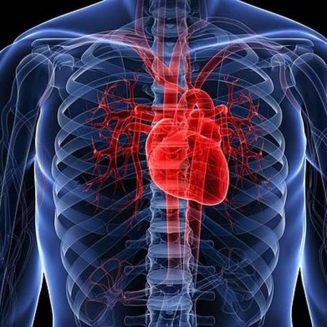 Что показывает и как проходит УЗИ сердечной мышцы?