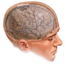Что собой представляет и как лечится вегетососудистая дистония?