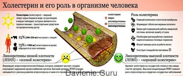 Подготовка и проведение исследований на уровень холестерина