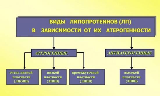 Классификация и разновидности липопротеидов