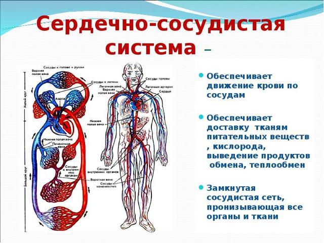 Полезные свойства облепихи в борьбе с гипертонией