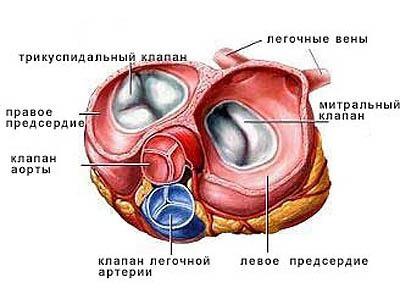 Причины болей в сердце, отдающих в лопатку, лечение