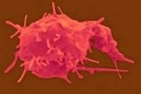 Чем опасен высокий и низкий уровень тромбоцитов в крови?
