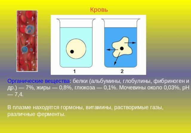 О чем говорит отклонение от нормы показателя альбумина в крови?