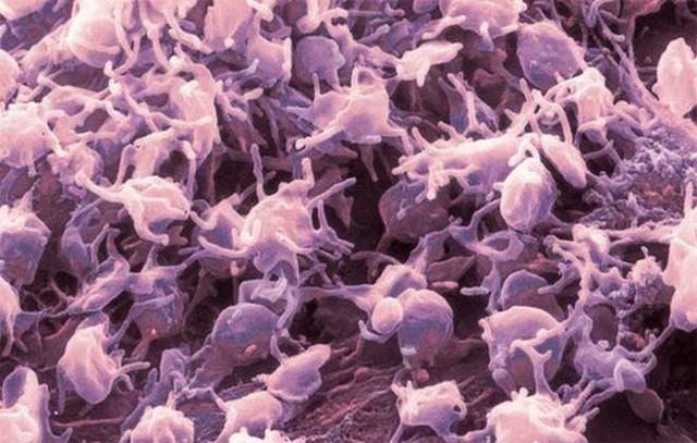 Повышение уровня тромбоцитов медикаментами и народными средствами