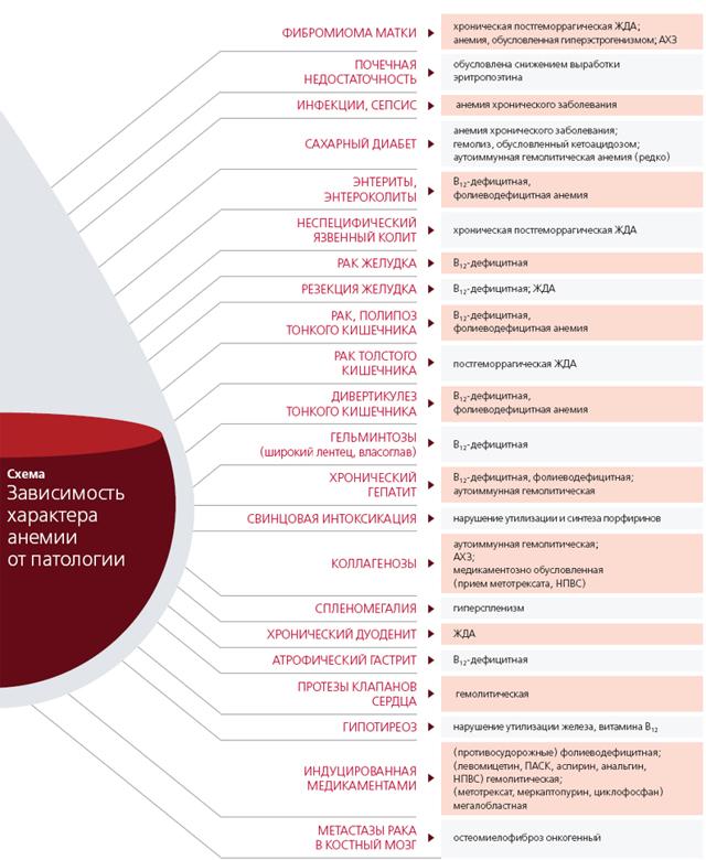 Залог успешного лечения анемии – в дифференциальной диагностике