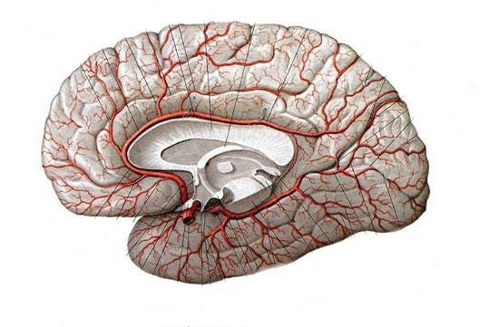 Как восстановить мозговое кровообращение
