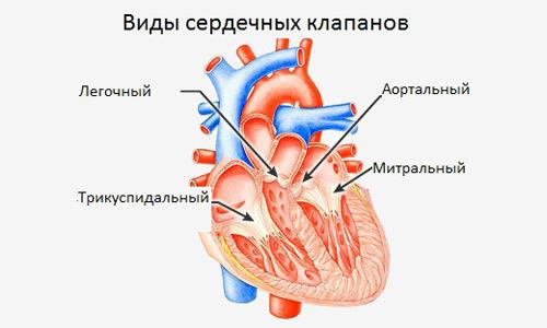 Операция по замене сердечного клапана и реабилитация после неё
