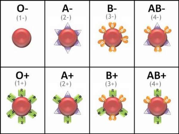 Важность совместимости характеристик крови
