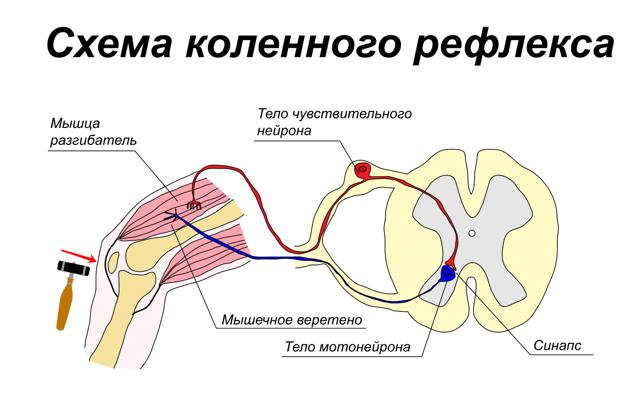 Восстановительная медицина в неврологии. Раннее восстановительное лечение больных с ОНМК